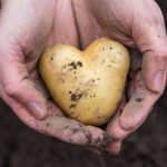 Kartoffeln dürfen reichlich verzehrt werden