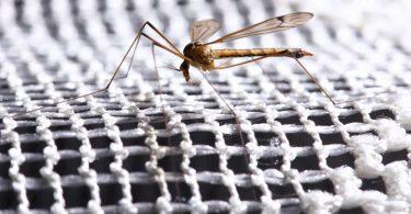 Insektenstiche: Vorbeugen ist die beste Maßnahme