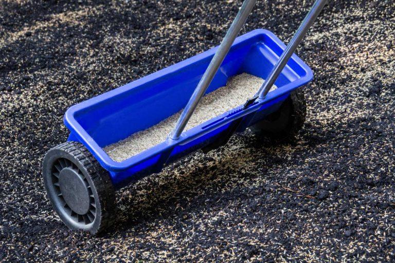 Rasen neu anlegen: Schritt für Schritt zum neuen Grün