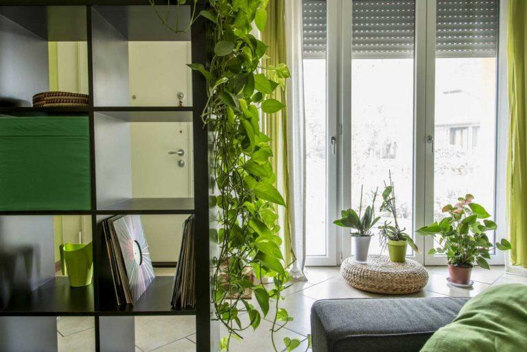 Zuhause wohnen: Mit Grünpflanzen gestalten und dekorieren