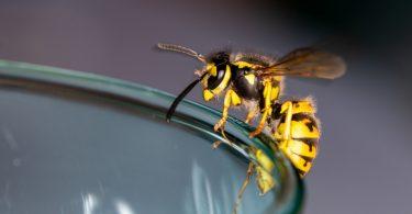 Richtiger Schutz vor Wespenstichen