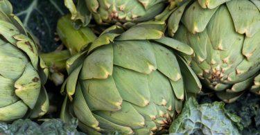 Die Artischocke hilft bei Verdauungsbeschwerden