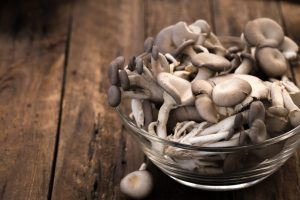 Austernpilze verbessern den Cholesterinspiegel