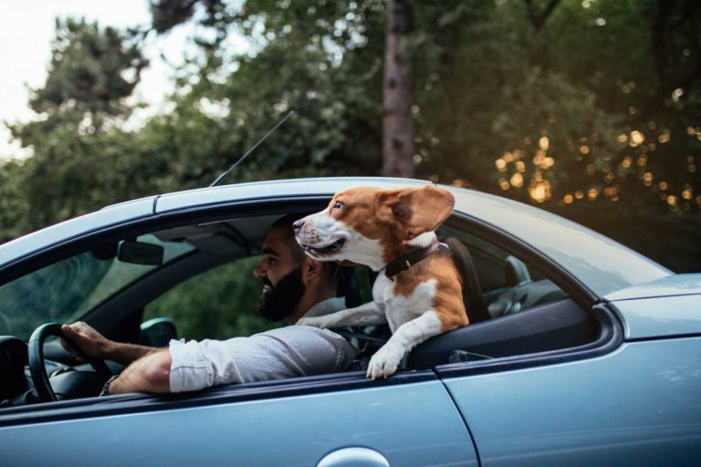 Reiseübelkeit bei Hunden behandeln