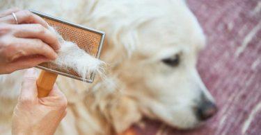 Haarausfall beim Hund homöopathisch behandeln