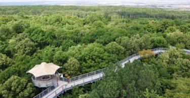 Der Wald-Wipfel-Weg in Maibrunn - ein Erlebnis für die ganze Familie