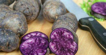 Den Blutdruck senken mit blauen Kartoffeln