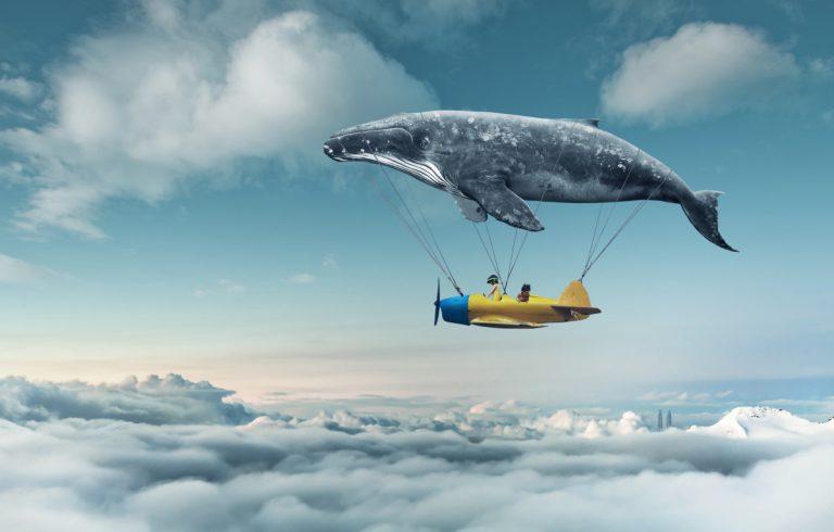 Klarträumen – So lernen Sie, Ihre Träume zu beeinflussen