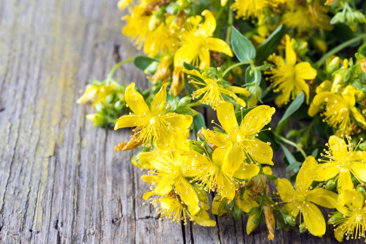 Depression und Winterblues mit Johanniskraut vorbeugen