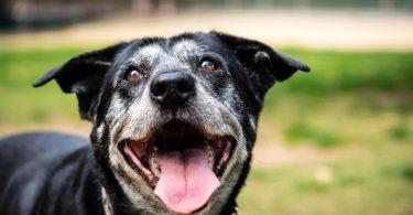 Entlastung im Alter für den Hund