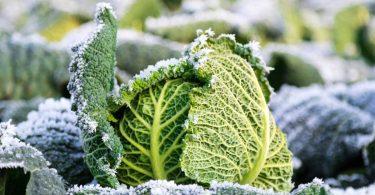 Warum vitaminreiche Ernährung im Winter besonders wichtig ist