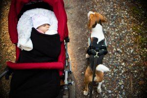 Sicher mit Hund und Kinderwagen spazieren gehen