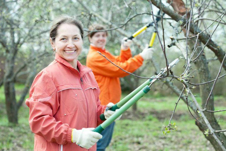Der beste Zeitpunkt für den Obstbaumschnitt