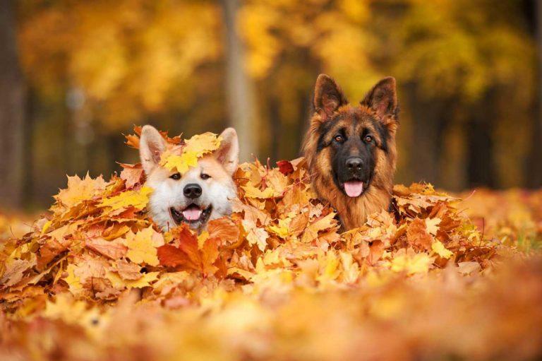 Herbstliche Mitbringsel für tierische Gefährten