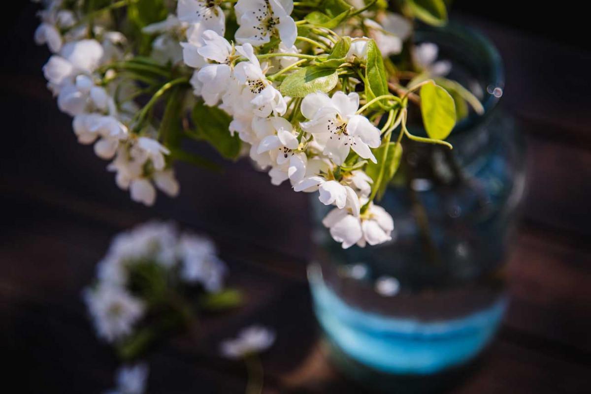 Mit Blüten im Winter Augen und Seele erfreuen