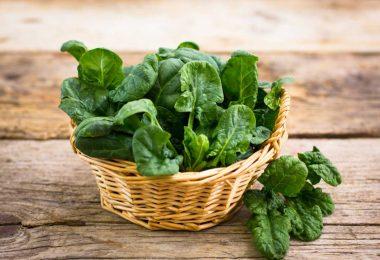 Spinat: So verwenden Sie das zarte und leckere Blattgemüse