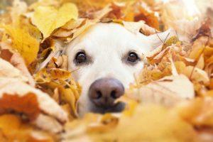 Erkrankung der Nase beim Hund homöopathisch behandeln