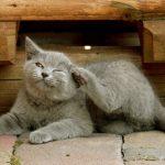 Homöopathie für Katzen: Ekzeme behandeln