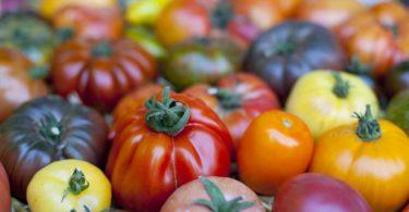 Tomaten sorgen im Winter für Vitamine und stärken das Immunsystem