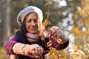Für Gartenneulinge: Das richtige Werkzeug für den Obstbaumschnitt