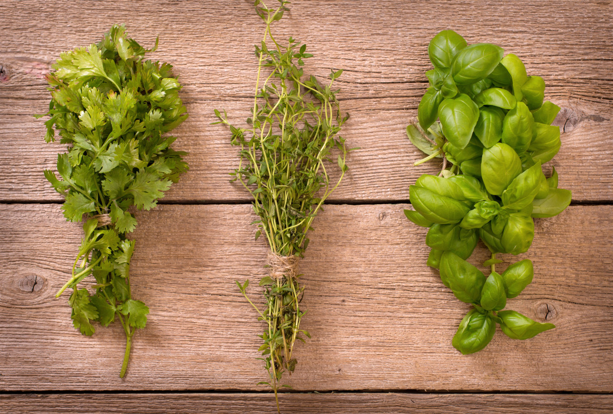 Gute Verdauung mit den ayurvedischen Gewürzen Basilikum und Koriander