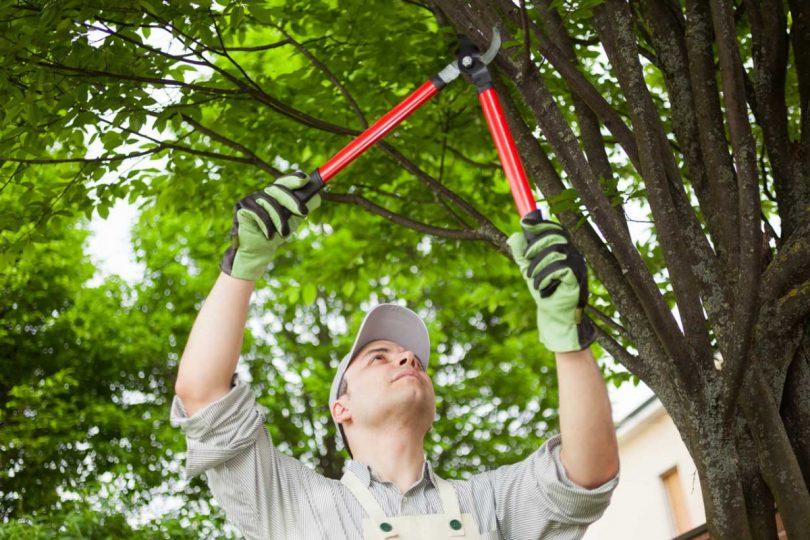 Mit Diesen Schnitt Regeln Obstbaume Richtig Schneiden Experto De
