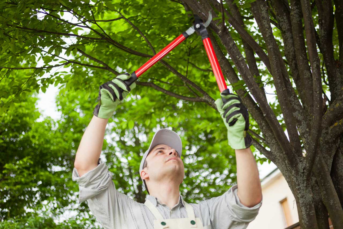 Mit diesen Schnitt-Regeln Obstbäume richtig schneiden