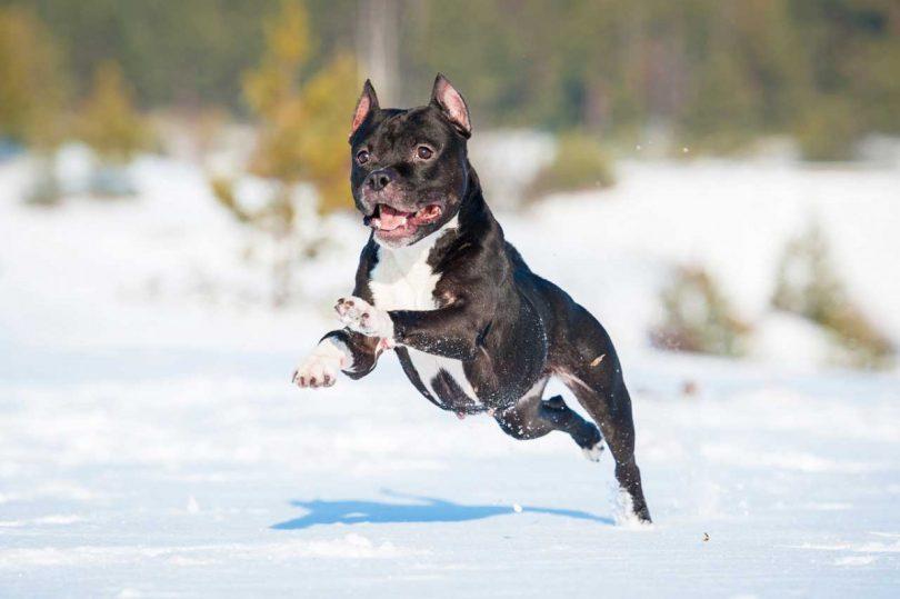 Homöopathie bei Muskelrheuma beim Hund einsetzen