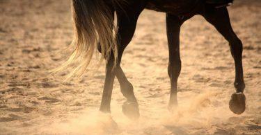 Sehnenerkrankung beim Pferd homöopathisch behandeln