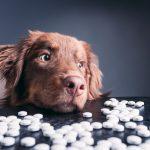 Homöopathie für Hunde – Besserung durch Wärme oder Kälte
