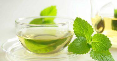 Mit Pflanzenkraft gegen Stress und drohenden Burnout