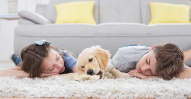 Wie Kinder den Umgang mit dem Hund lernen