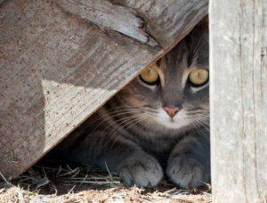Angst und scheues Verhalten bei Katzen mit Homöopathie beeinflussen