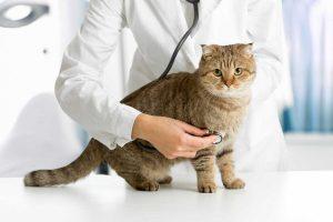 Schmerzen bei der Katze – Homöopathie hilft