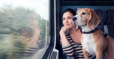 Urlaub mit Hund und Katze: Tiertransport rechtzeitig planen