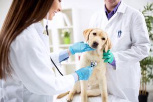 Aufbauende homöopathische Mittel für kranke Hunde