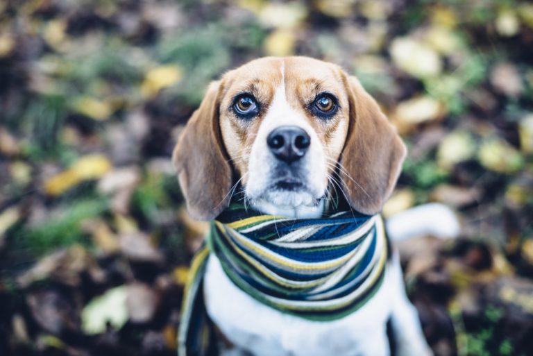 Husten beim Hund – Homöopathie kann helfen