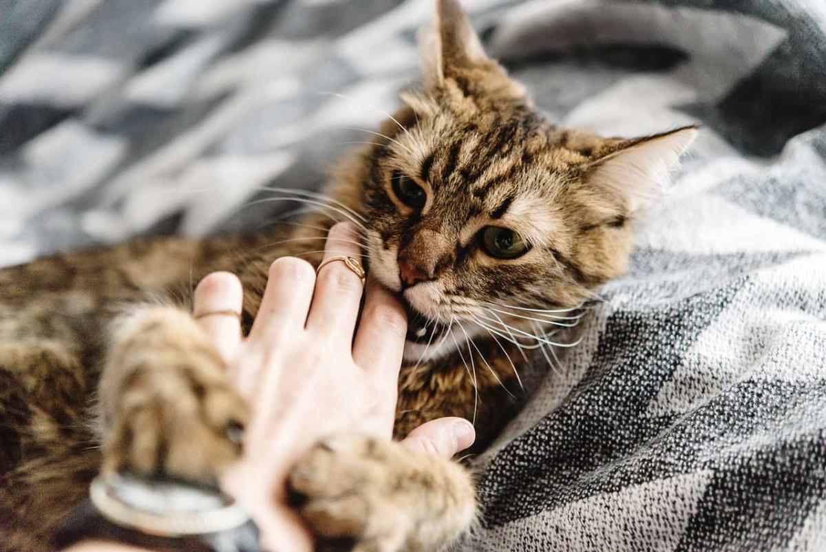 Die Katze beißt und kratzt - helfen Sie mit Homöopathie