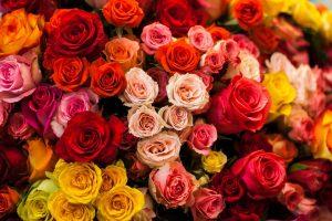 Tipps zum Valentinstag: Sinnliche Rezepte mit Rosenblüten