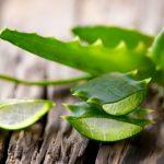 Mit Aloe vera das Wohlbefinden steigern