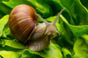 Schneckenkorn: Wie es wirkt und was Sie beim Einkauf beachten sollten