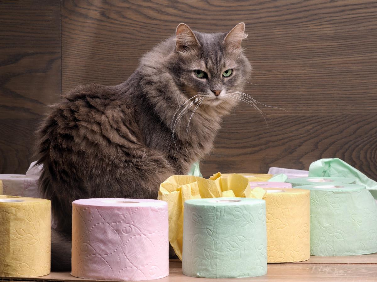 Durchfall bei der Katze – Homöopathie heilt