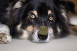Schnupfen beim Hund mit homöopathischen Mitteln heilen