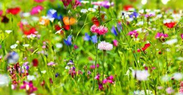 Vier Gründe für eine bunte Wiese im Garten