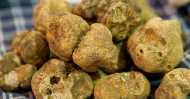 Pilz-Delikatessen aus Afrika: So verarbeiten Sie Kalahari-Trüffel
