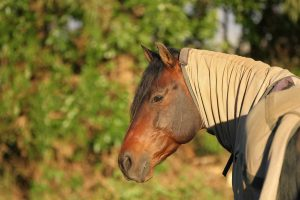 Sommerekzem beim Pferd mit Homöopathie behandeln