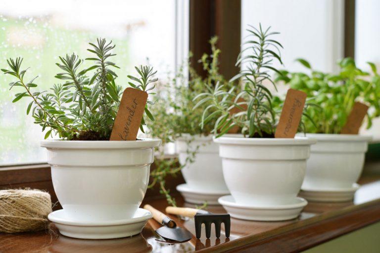 Kräuter im Topf für Garten und Balkon