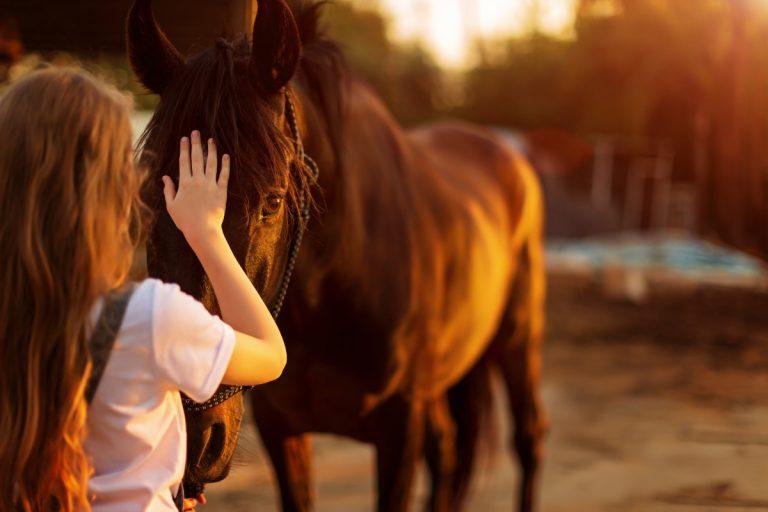 Durchfall beim Pferd homöopathisch behandeln