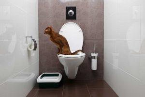 Was tun, wenn die Katze nicht stubenrein ist?
