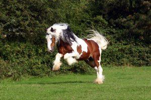 Rückenprobleme beim Pferd homöopathisch behandeln